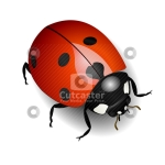 Illustration of a Ladybug